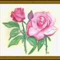 ROSES DE MON JARDIN